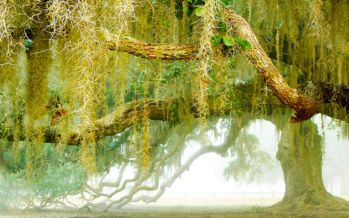 fountainebleu state park (image: courtesy steampunkgasoline)