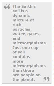 organic soil 001