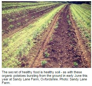 organic soil 002